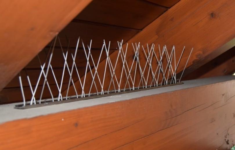 Come allontanare i piccioni dal tetto - Tabbid Blog