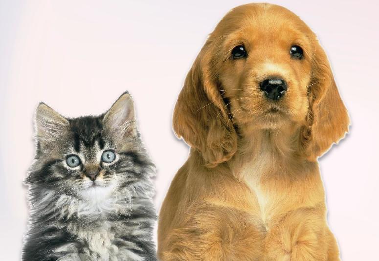 Spazzola per togliere i peli del cane: ASPIRAPELUCCHI PORTATILE